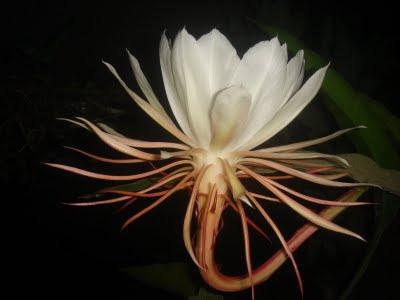 download gambar bunga keren
