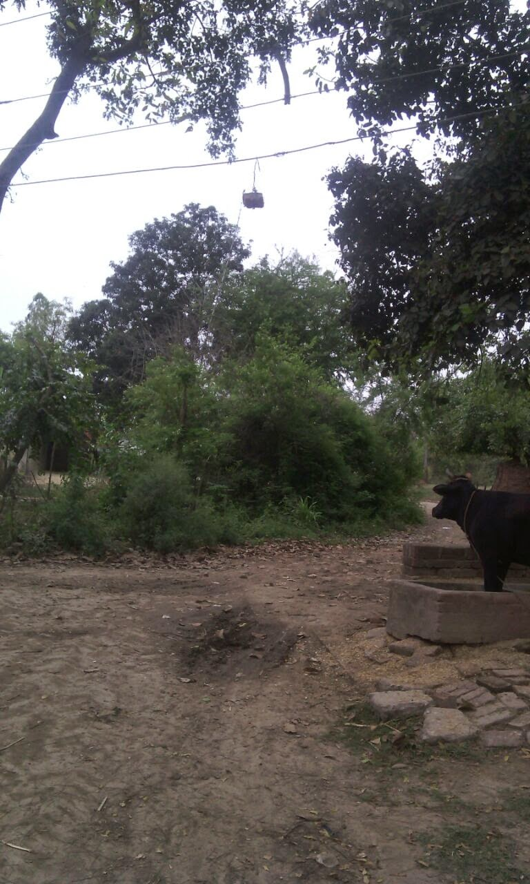 electric-board-uttar-pradesh-विद्युत् विभाग उत्तर प्रदेश