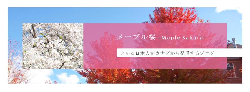 メープル桜 -Maple Sakura-