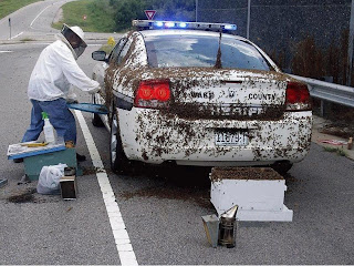 funniest picture of police: disinfection of the police car