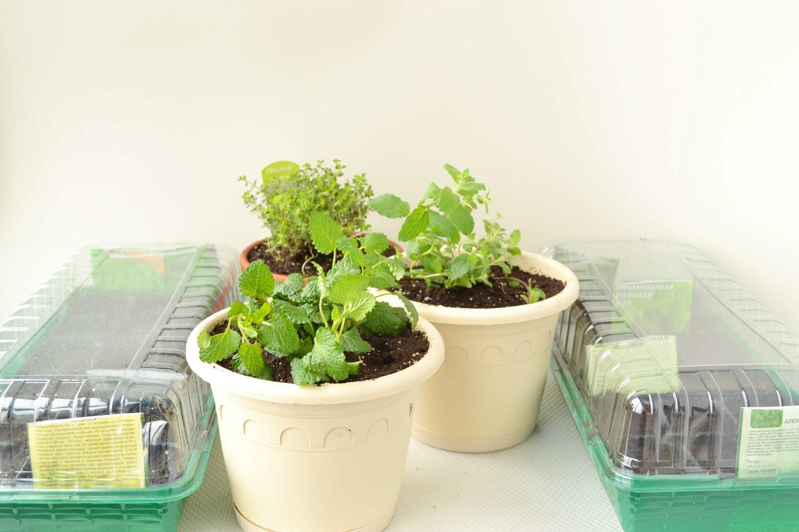 Декоративные украшения для сада и огорода 5