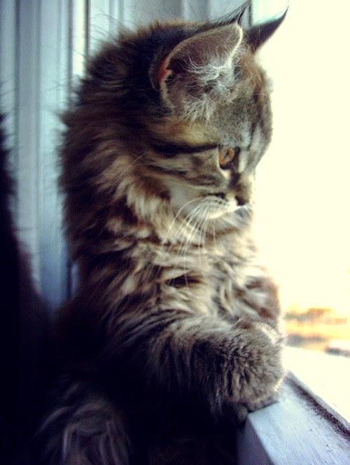 Meu gatinho na janela...