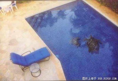 Brillant travail des piscines