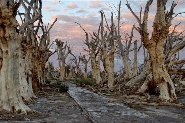 أشجار القرية بعد أن تدمرت بالكامل