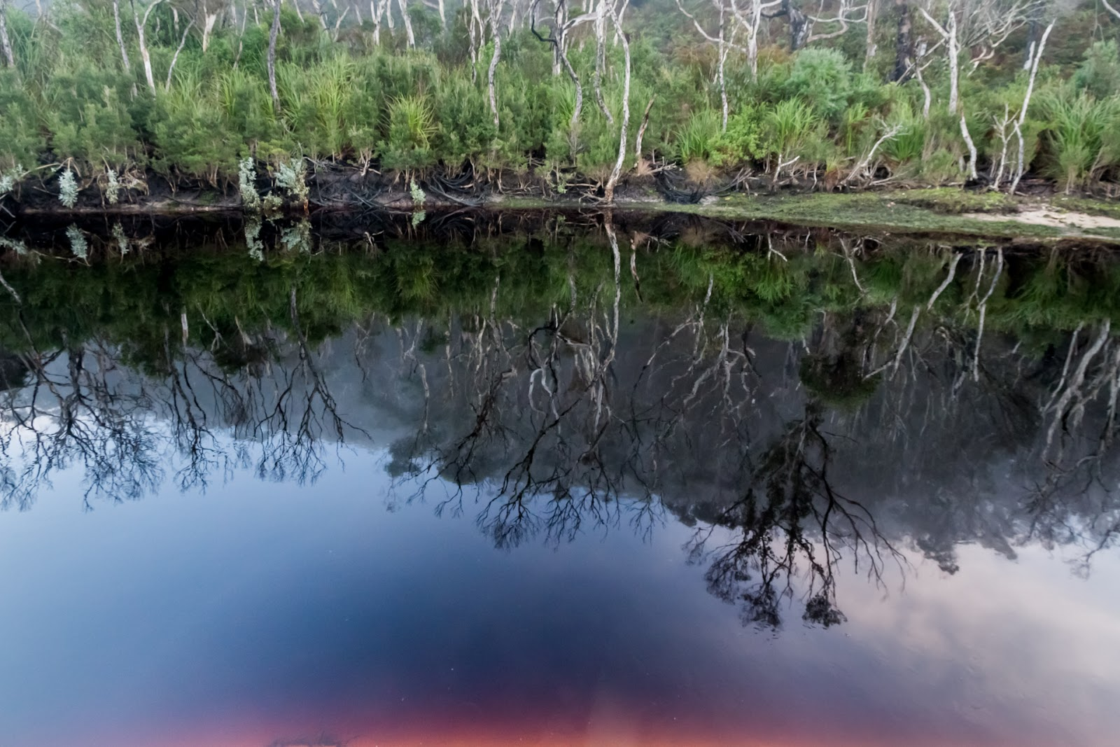 reflections in dark water of miranda creek wilsons promontory