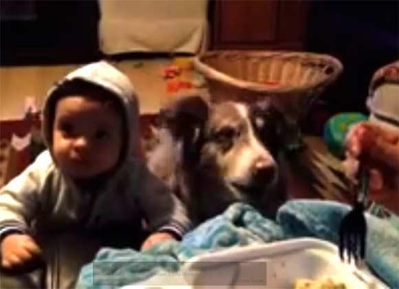 Este perro aprende a decir Mamá para que le den comida