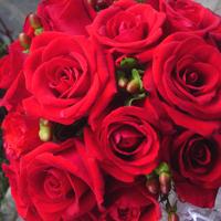 Buque Rosas Vermelhas