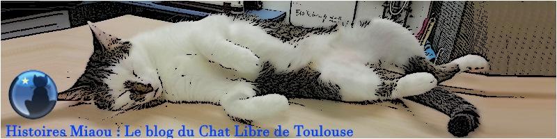 Histoires Miaou : le blog du Chat Libre de Toulouse