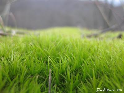 Grass Macro Photo