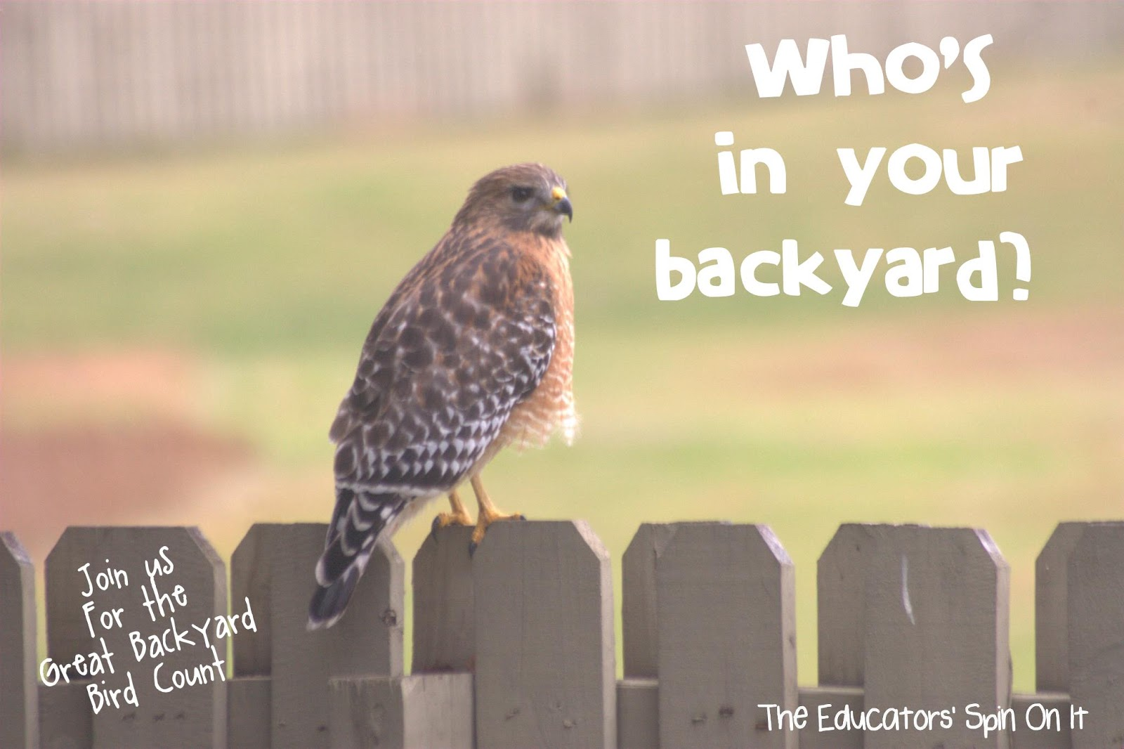 the educators 39 spin on it the great backyard bird count