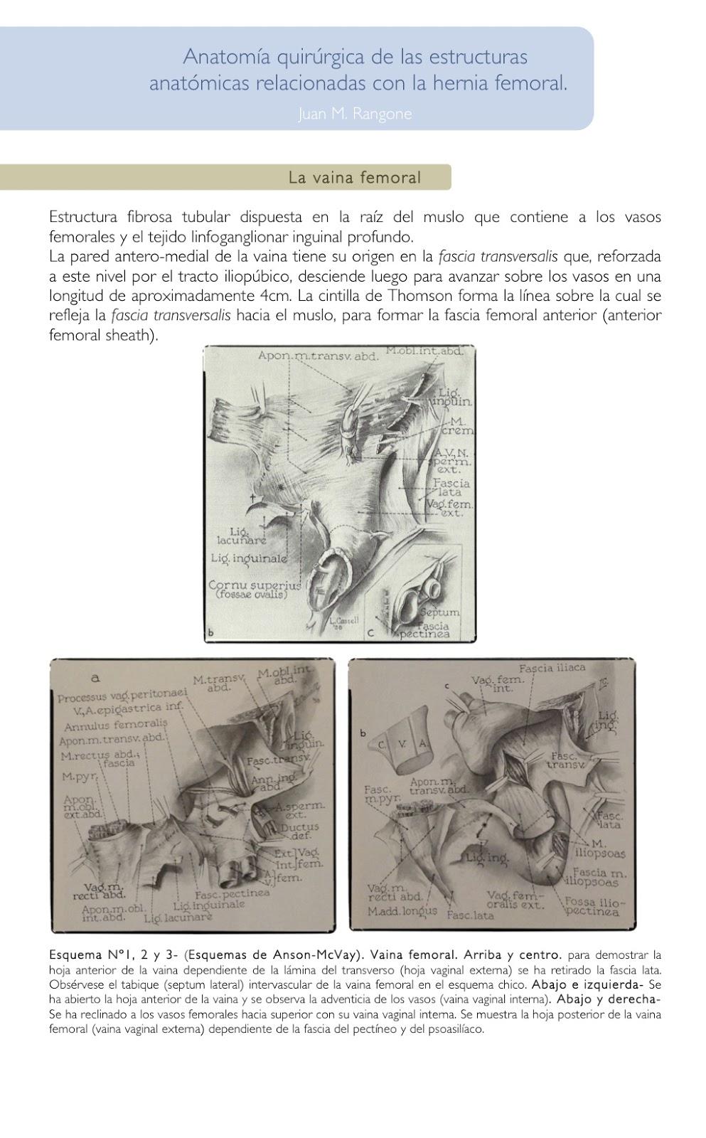 Cuadernos de Anatomía Quirúrgica: Anatomía quirúrgica de la hernia ...
