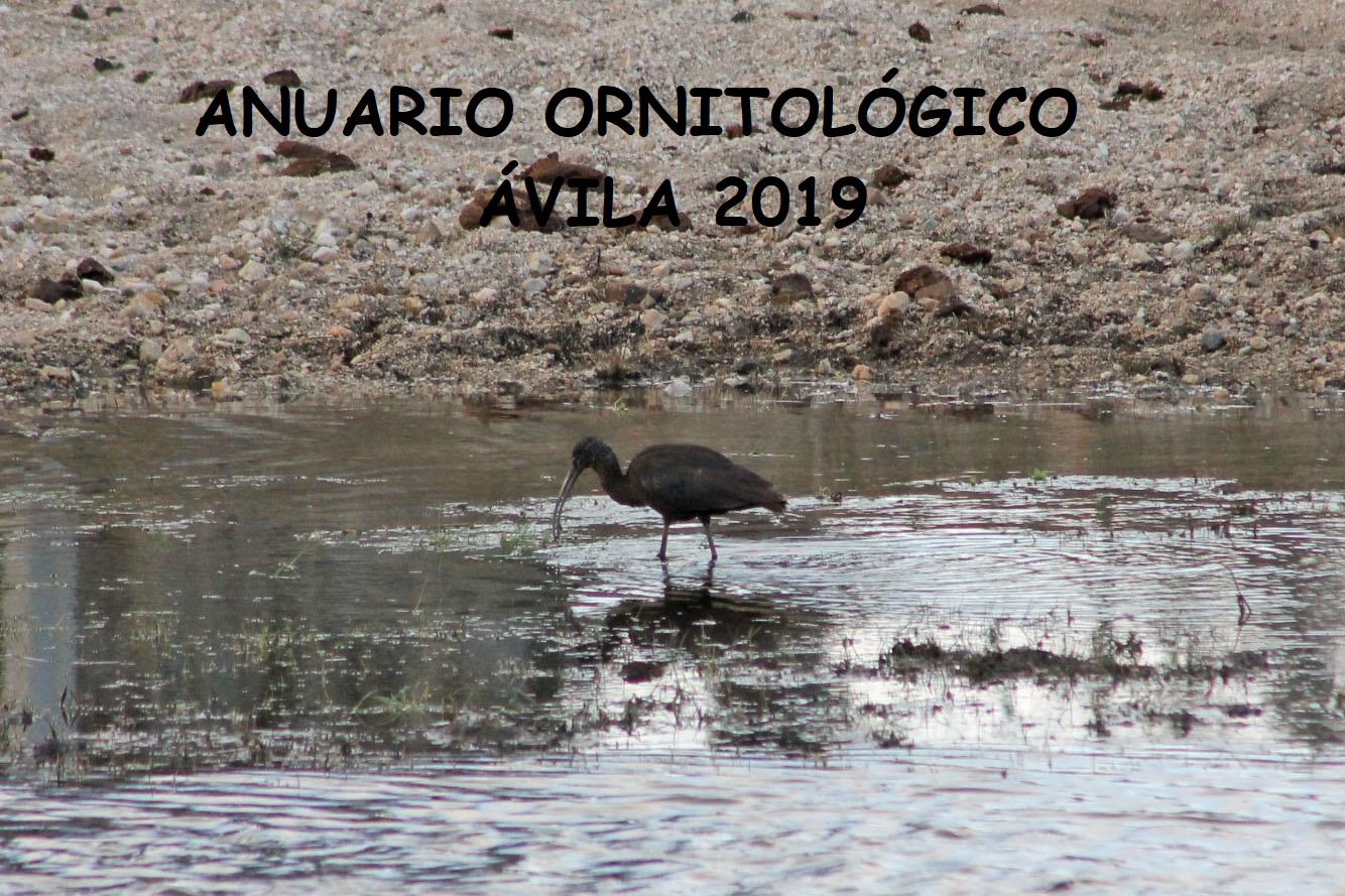 ANUARIO ORNITOLÓGICO ÁVILA 2019