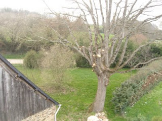 Pollarded oak tree and rear garden, taken from the roof of the Gite