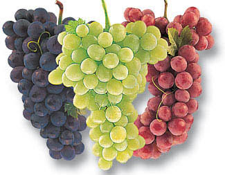 Permalink to Grapes that contain many kinds of vitamins and antioxidants