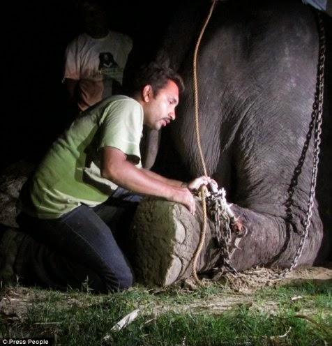Gajah Diselamatkan