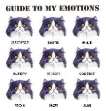 Psikoloji duygular ve duygusal farkindalik