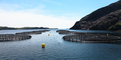 Salmon farming cages at St.Alban's newfoundland