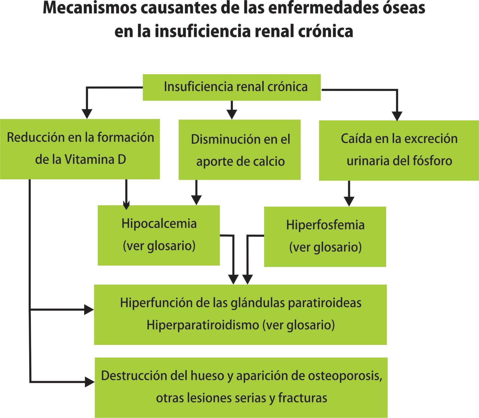 Enfermedades del Riñón: Cómo afrontar la Insuficiencia Renal Crónica