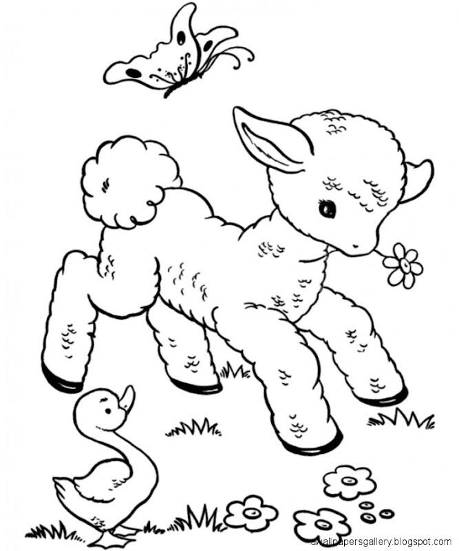Cute Baby Animal Sketches