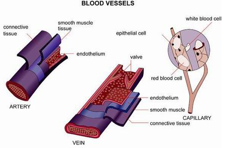 Causes and Symptoms of Blood Disorder