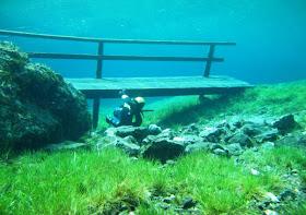 Indahnya Padang Rumput Bawah Air [ www.BlogApaAja.com ]
