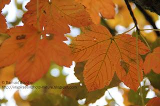 photo macro les feuilles d'automne