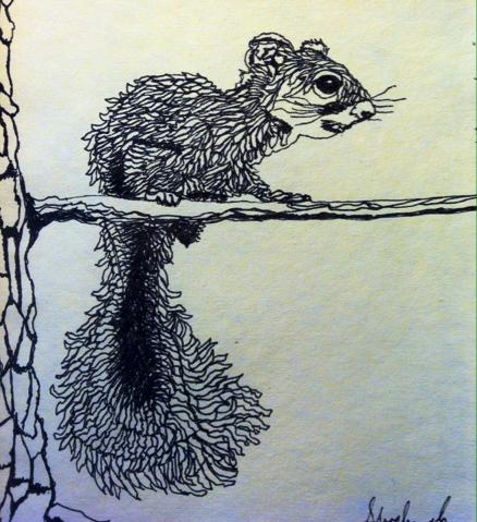 Squirrel Sketch by Shoshanah Lee Marohn 2016