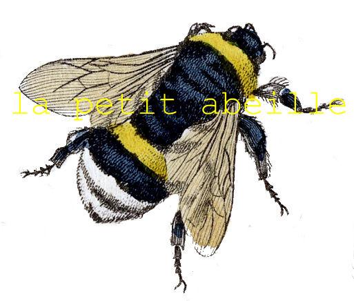 la petit abeille