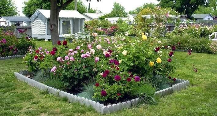 Landscaping Ideas Rose Garden : Rose garden design ideas
