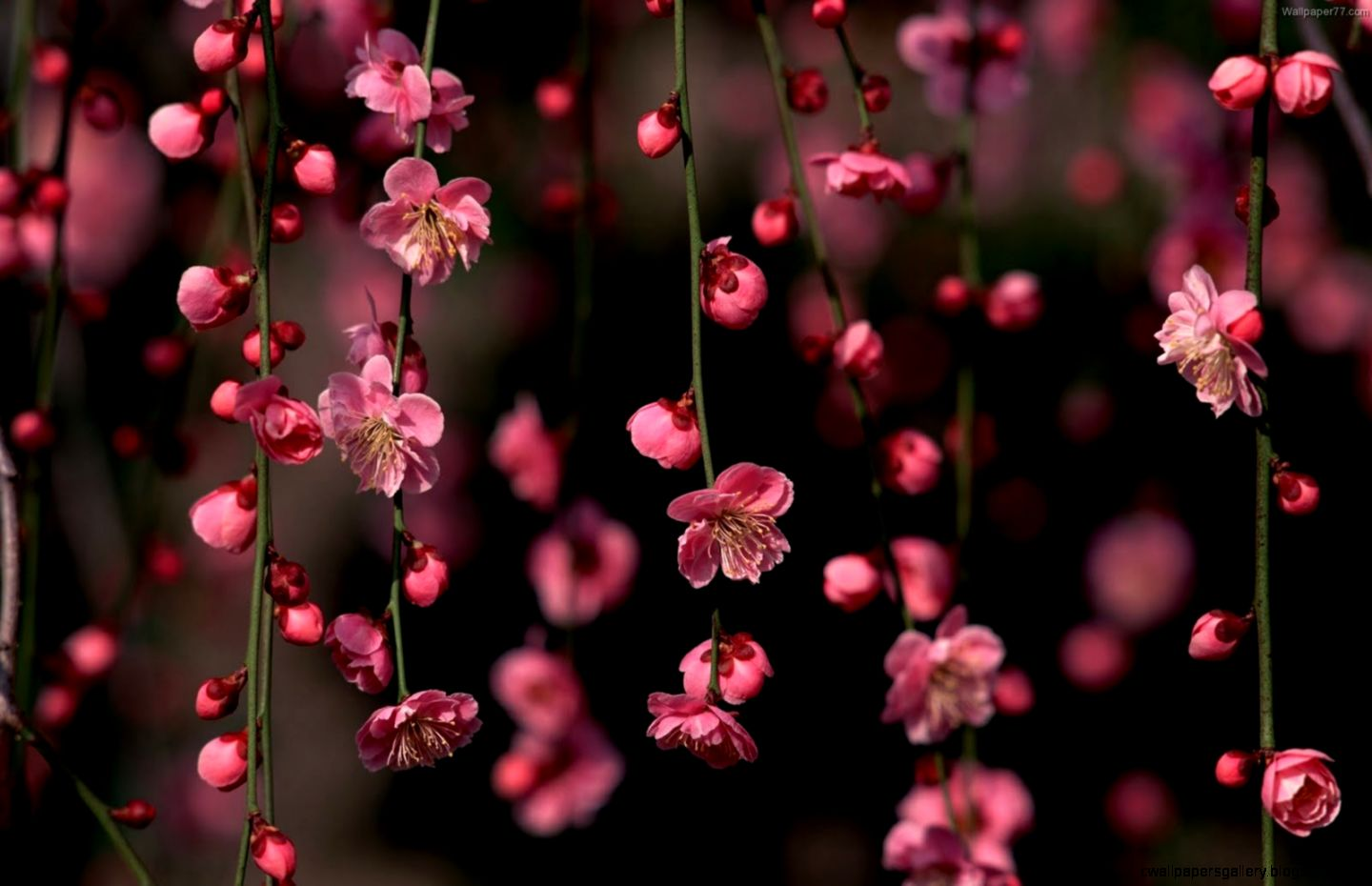 43 Pink Flowers HD WallpapersBackgrounds For Free Download