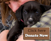 http://milldogrescue.org/Donate.html