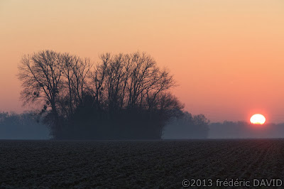 froid silhouette aube arbres soleil Seine-et-Marne