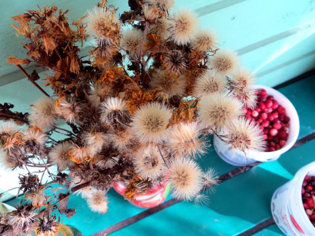 flower seeds cranberries