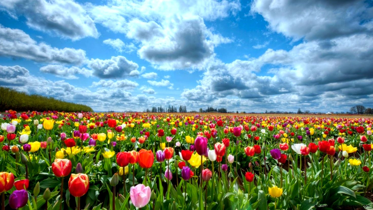 Beautiful Flower Wallpapers in HD   HD Wallpapers   High Quality