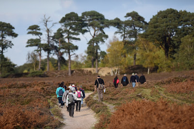 Guided Walks and Cycles in the New Forest Hampshire UK