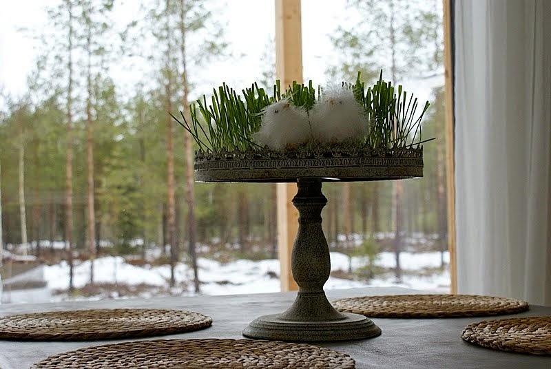 valkoiset verhot, betonipöytä, pääsiäinen, pääsiäistipu
