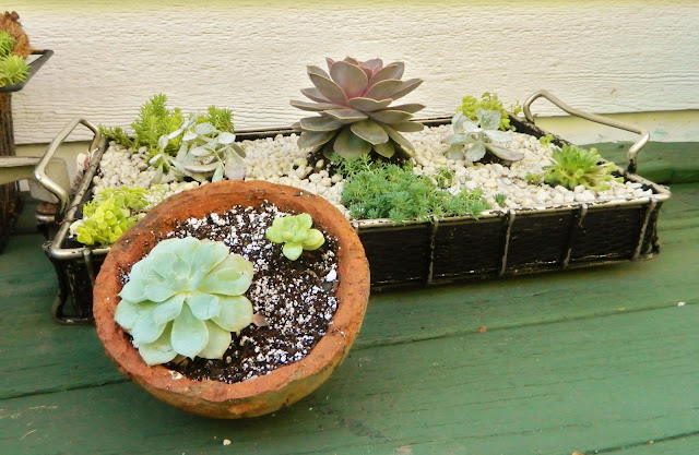succulent garden in repurposed containers via homeologymodernvintage.com