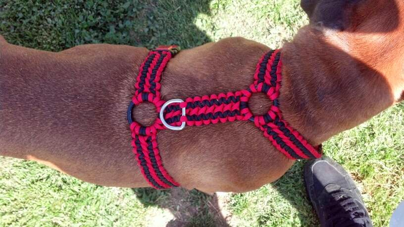 the paracord blog paracord a dog 39 s best friend