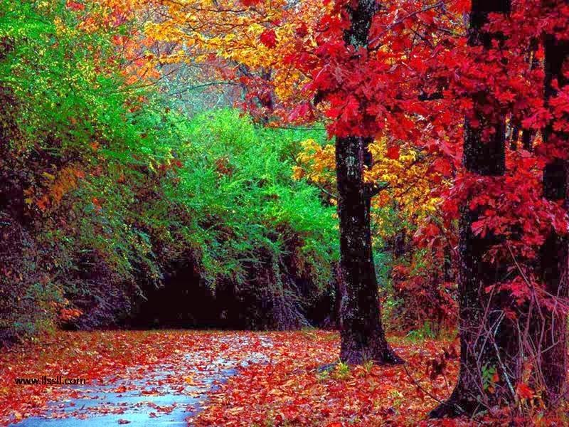 صور طبيعة ازهار باللون الاحمر