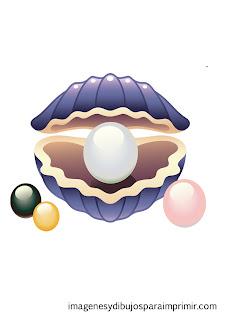 ostra con perlas de colores