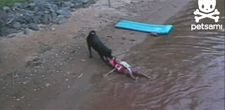 Σκύλος ναυαγοσώστης σώζει παιδάκι (Video)