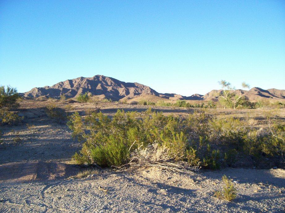 The life of a tree quartzite arizona for Landscaping rock queen creek az