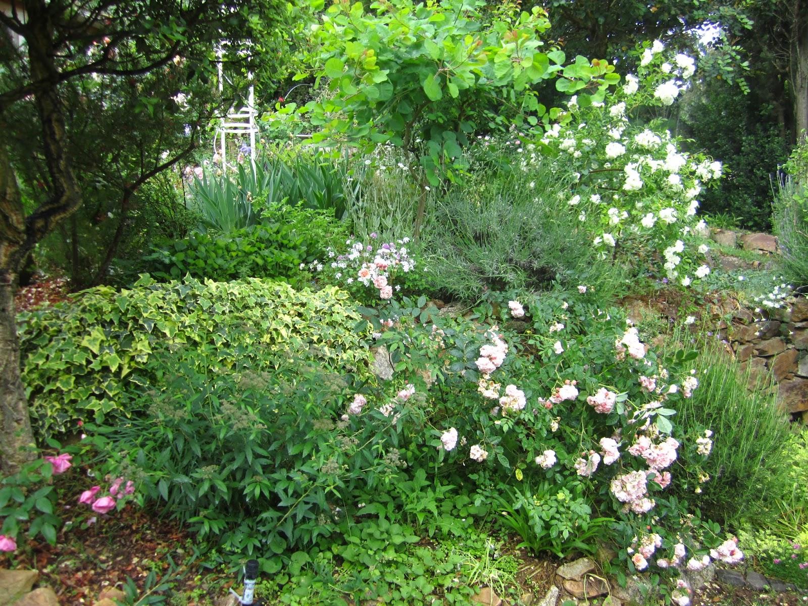 maggio 2015 - Furighedda gardening