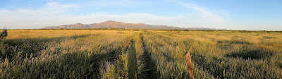 grassland restoration in new mexico