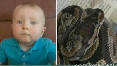 Encuentra una pitón  a punto de devorar a su bebé en la cuna