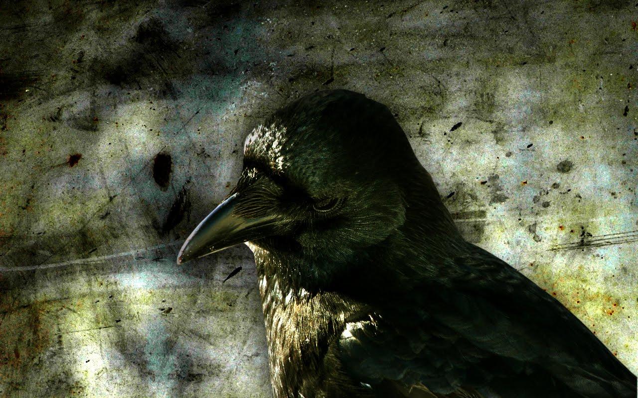 http://3.bp.blogspot.com/-3roEkiftS0Y/TnDBgXzXUdI/AAAAAAAAAJg/EV7NQyELeJ4/s1600/crow-wallpapers-7-716912.jpg