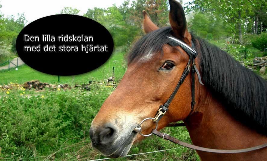 Stall Lövås