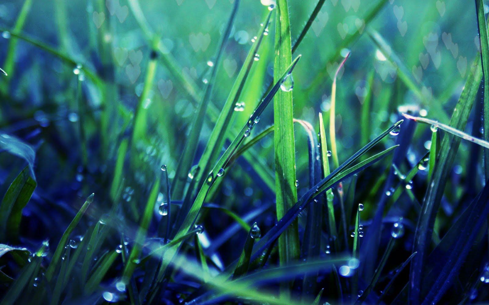 http://3.bp.blogspot.com/-3rxcmV3THh4/Tle_HAzHjtI/AAAAAAAAGog/O3XnOuKv-Qs/s1600/Nature+Widescreen+HD+Wallpaper+1680+X+1050+30.jpg