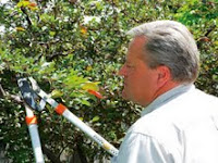 ted pruning