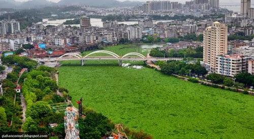 Aneh Sungai di China Berubah Menjadi Carpet Hijau Bersaiz Raksasa
